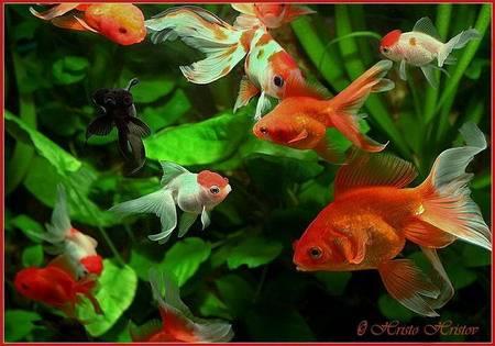 рыбки в аквариуме фото с названием