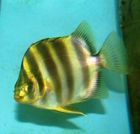 продам прикормку для рыб оптом