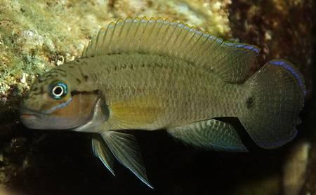 Содержание аквариума уход за рыбами 139